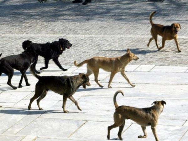 Γιάννενα: Οι «ιδιοκτήτες» των ζώων ευθύνονται για τα αδέσποτα
