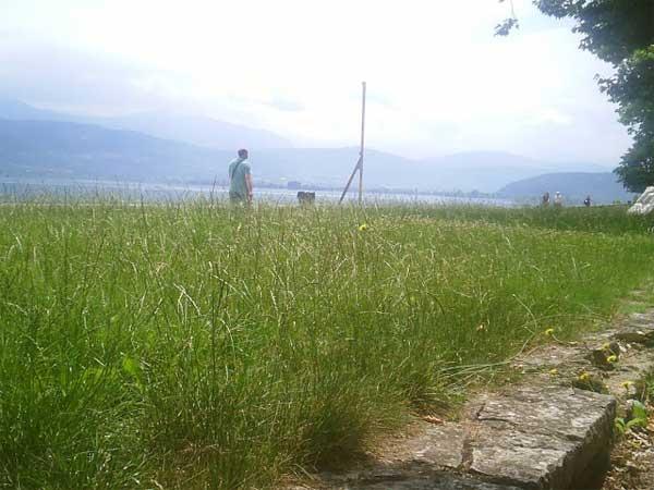 Γιάννενα: Τα χορτάρια «έπνιξαν» την παραλίμνιο περιοχή!