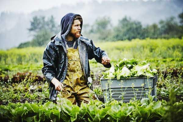 Γιάννενα: Εκτάσεις σε νέους Γιαννιώτες για να εργαστούν ως αγρότες