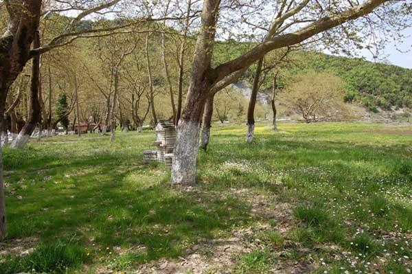 Γιάννενα: Ένα παραποτάμιο πάρκο για παιδιά θα γίνει στην Τύρια!