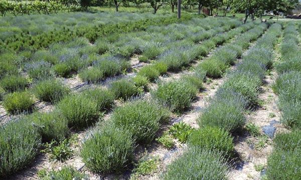 Γιάννενα: «HERBINNO»...Καινοτόμες δράσεις για αξιοποίηση των φαρμακευτικών φυτών