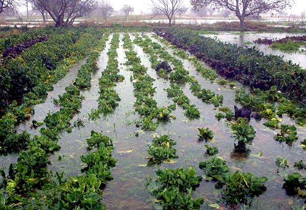 Γιάννενα: Έγιναν οι εκτιμήσεις για τις ζημιές των αγροτο-κτηνοτρόφων Ιωαννίνων