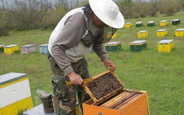 Γιάννενα: Μέτρα στήριξης ζήτησαν οι μελισσοκόμοι Ιωαννίνων